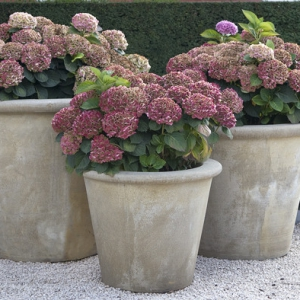 Grote moderne tuinpot